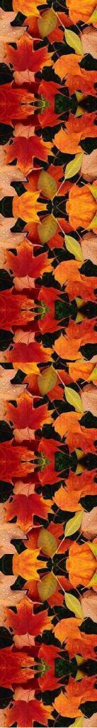 autumnlvs1lg