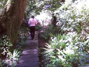 Boardwalk down Cape Flattery trail